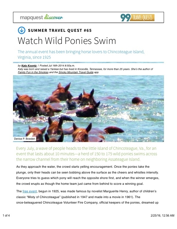 Watch Wild Ponies Swim